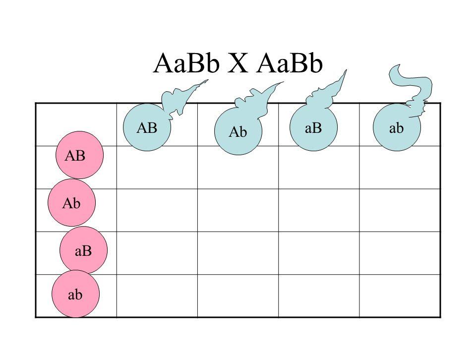 AaBb X AaBb AB aB ab Ab AB Ab aB ab