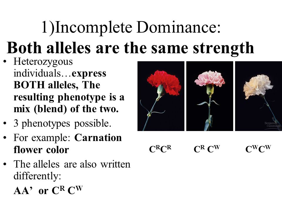 1)Incomplete Dominance: Both alleles are the same strength