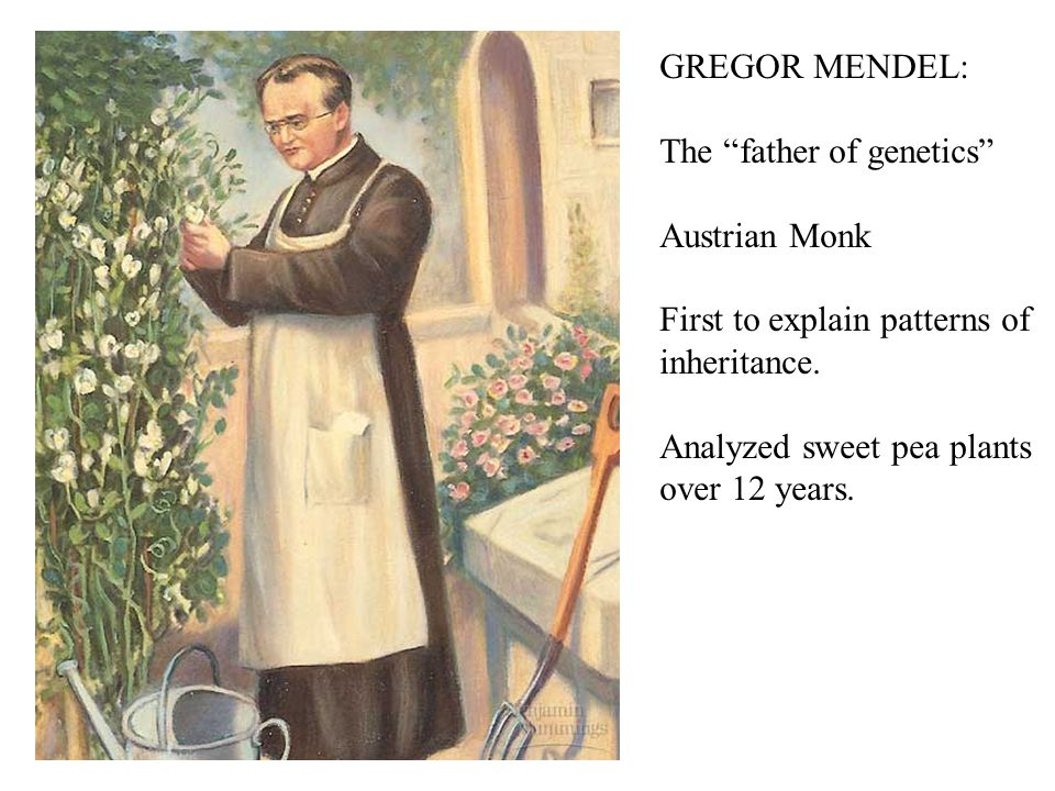 GREGOR MENDEL: The father of genetics Austrian Monk. First to explain patterns of. inheritance.