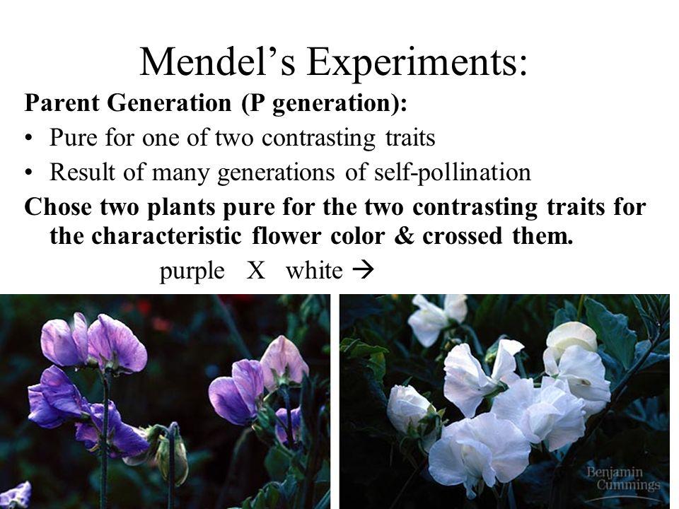 Mendel's Experiments: