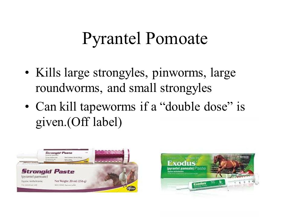 Pyrantel Pomoate Kills large strongyles, pinworms, large roundworms, and small strongyles.