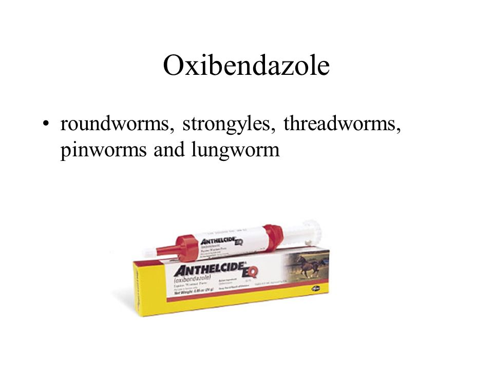 Oxibendazole roundworms, strongyles, threadworms, pinworms and lungworm