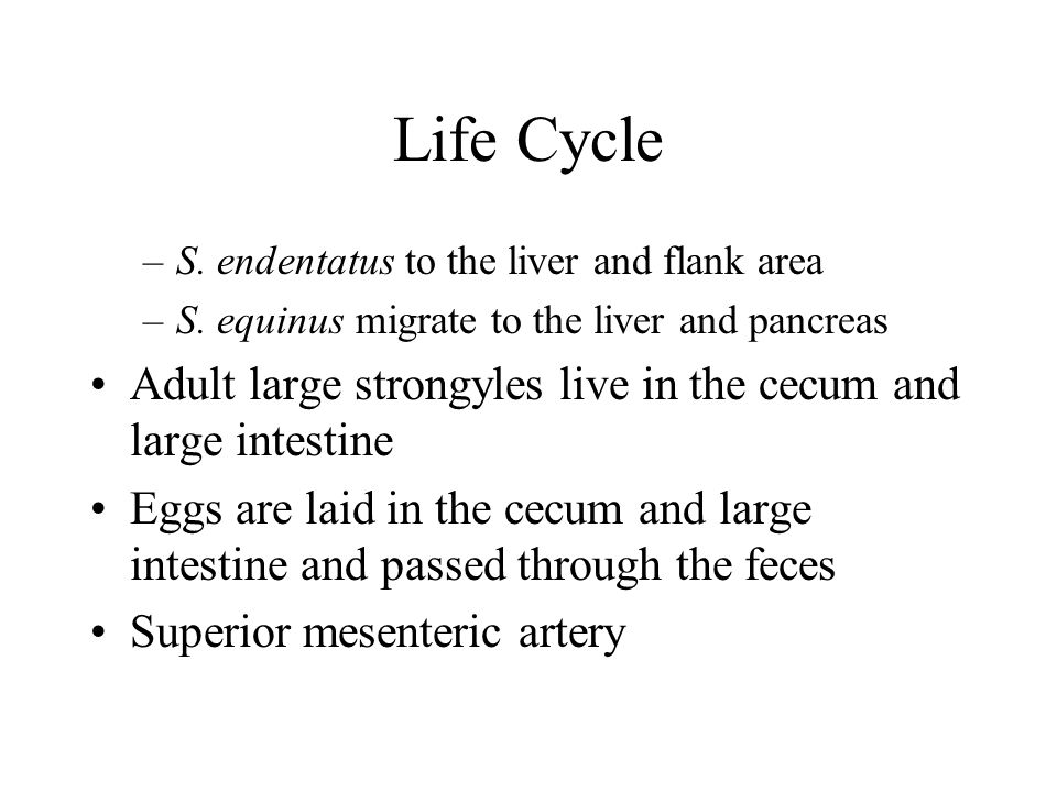 Life Cycle S. endentatus to the liver and flank area. S. equinus migrate to the liver and pancreas.