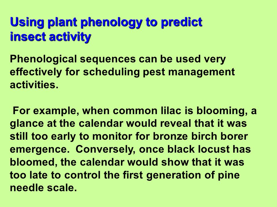 Using plant phenology to predict insect activity