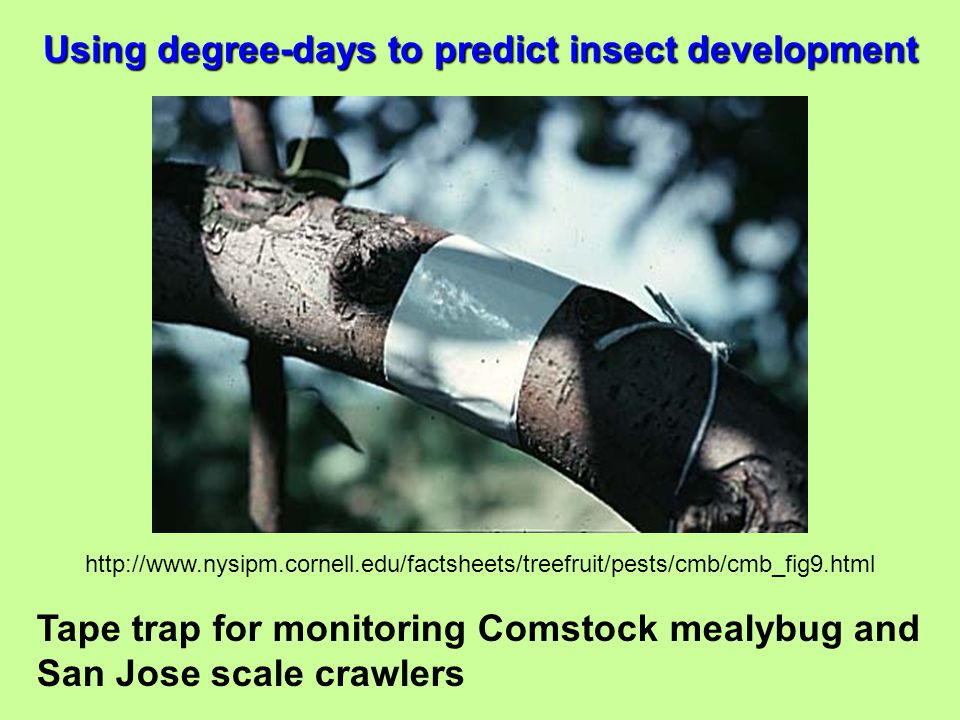 Using degree-days to predict insect development