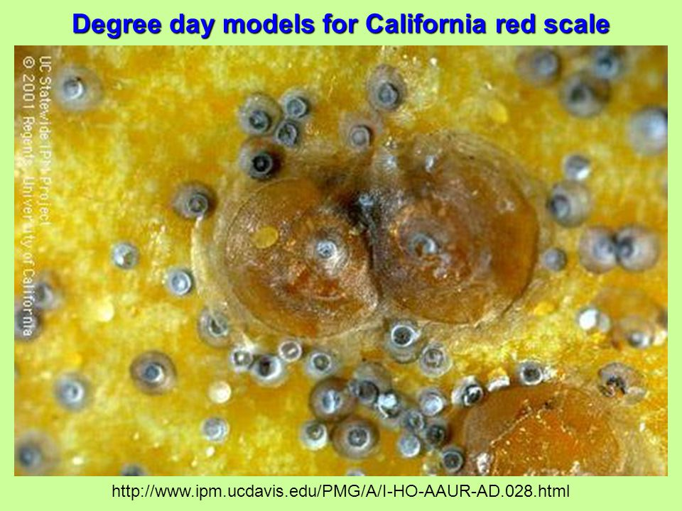 Degree day models for California red scale