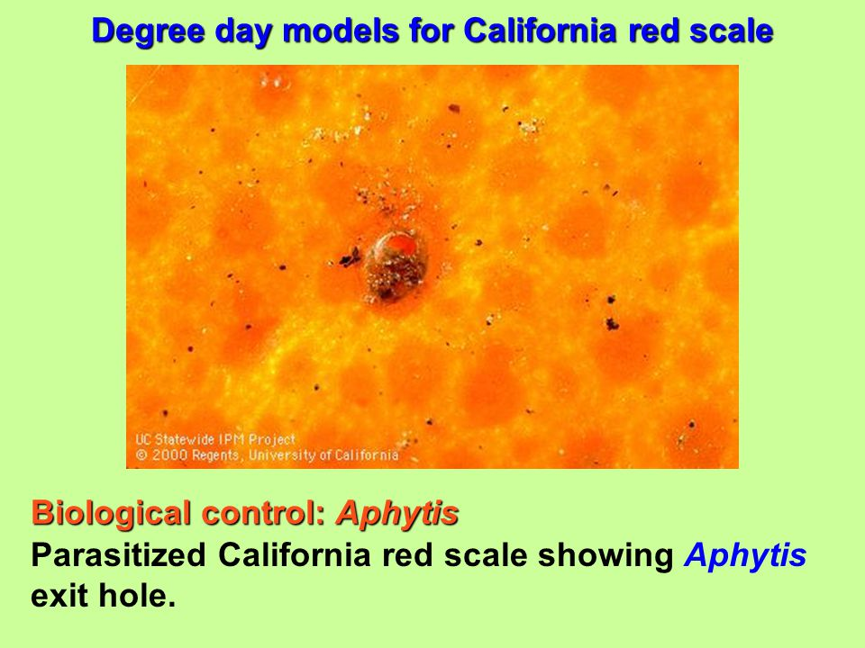 Biological control: Aphytis