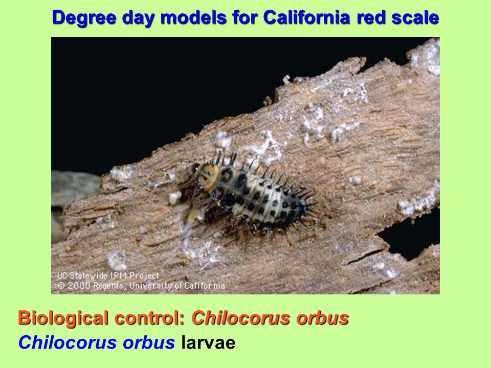 Biological control: Chilocorus orbus