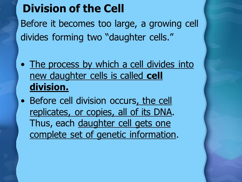 Division of the Cell Before it becomes too large, a growing cell