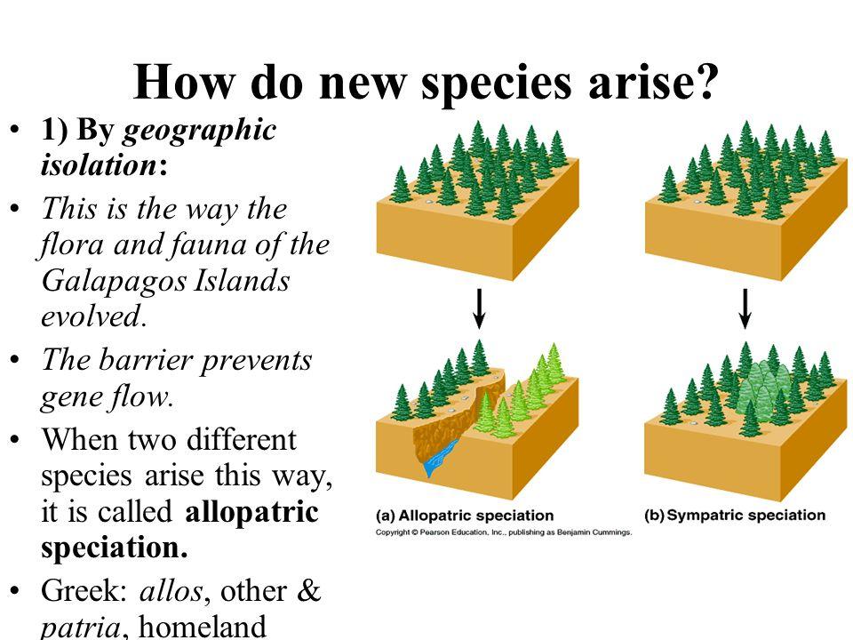 How do new species arise
