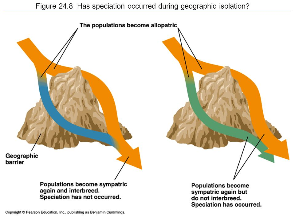 Figure 24.8 Has speciation occurred during geographic isolation