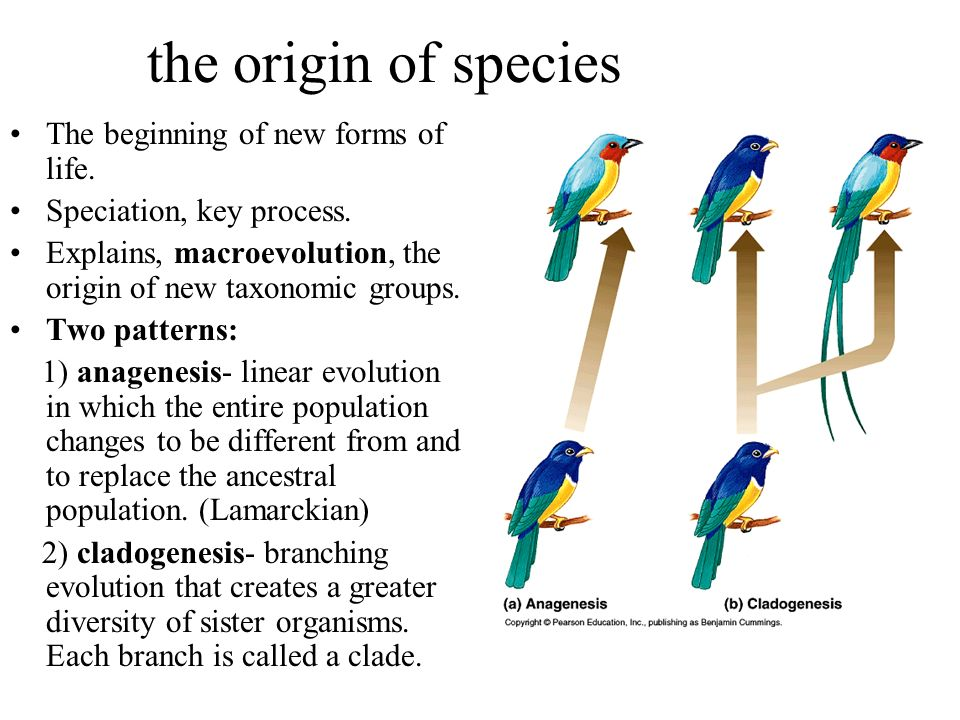the origin of species The beginning of new forms of life.