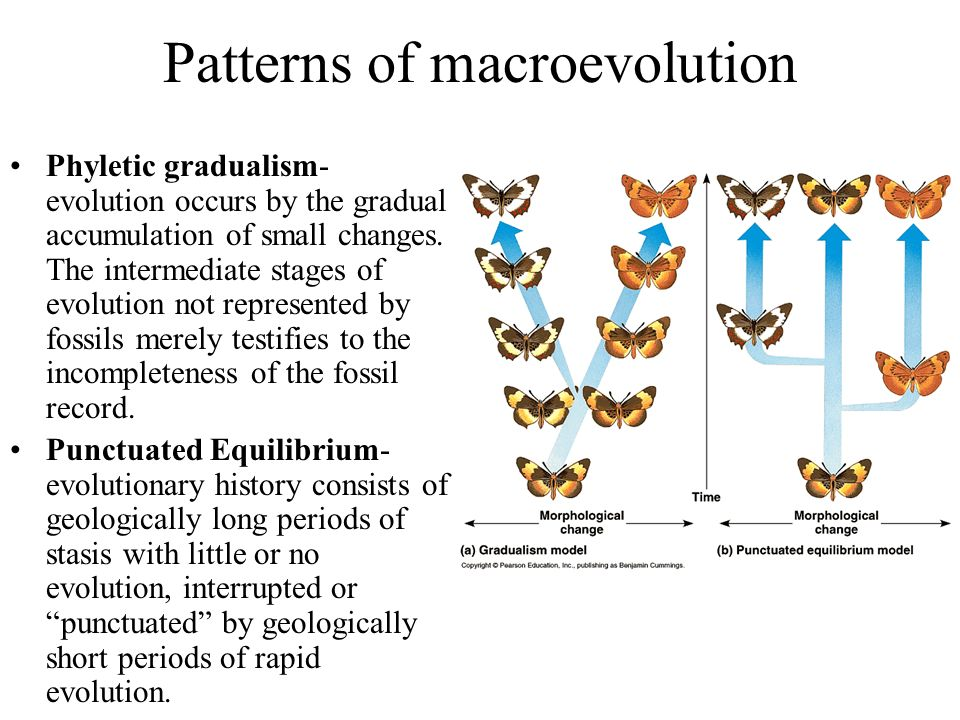 Patterns of macroevolution