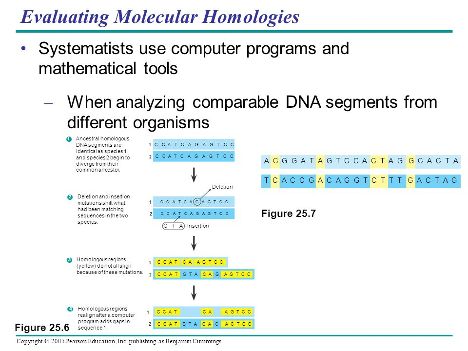 Evaluating Molecular Homologies