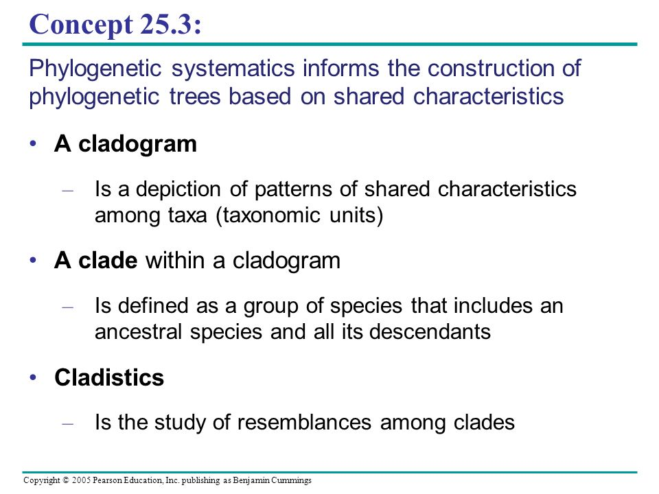 Concept 25.3: Phylogenetic systematics informs the construction of phylogenetic trees based on shared characteristics.
