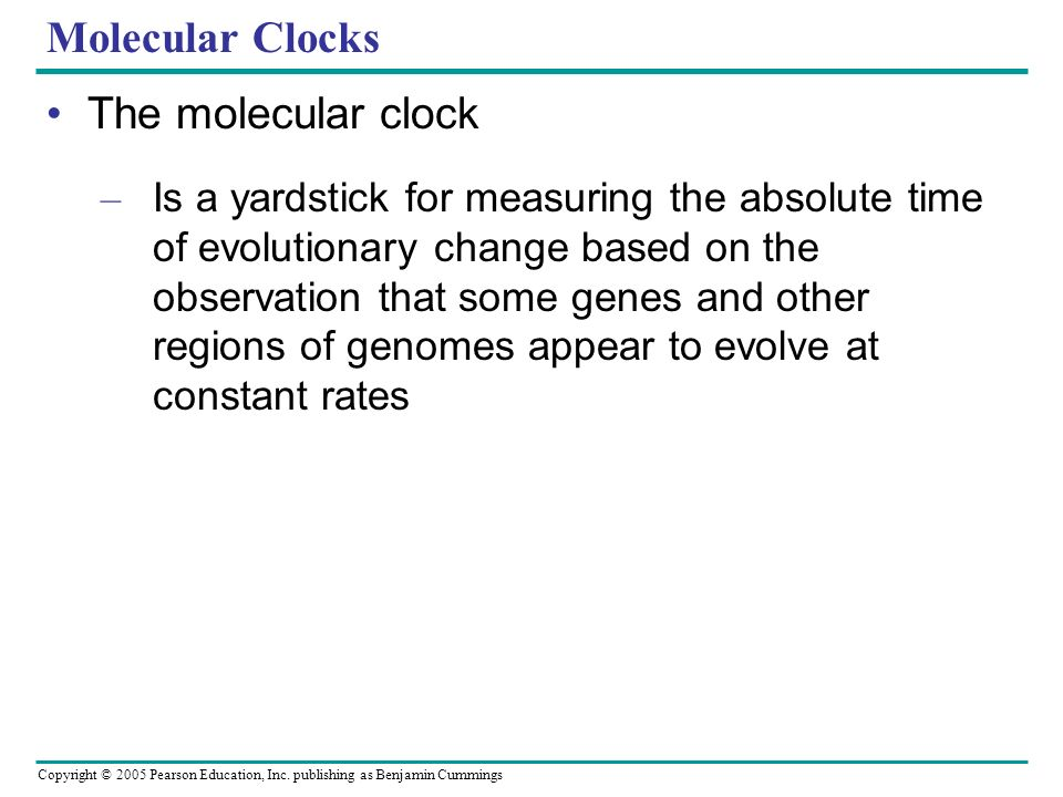 Molecular Clocks The molecular clock
