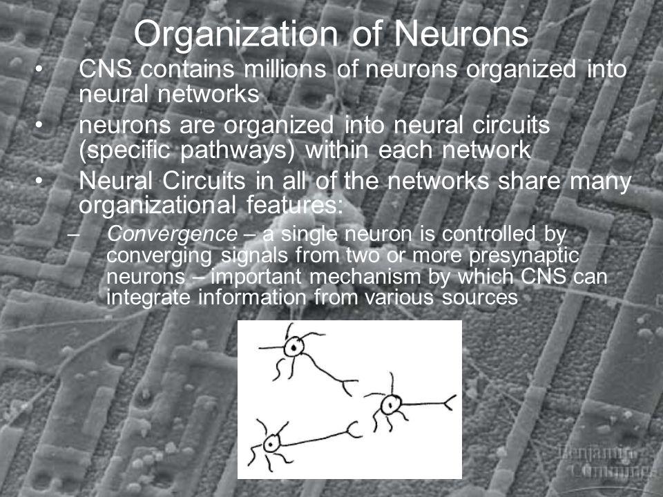 Organization of Neurons