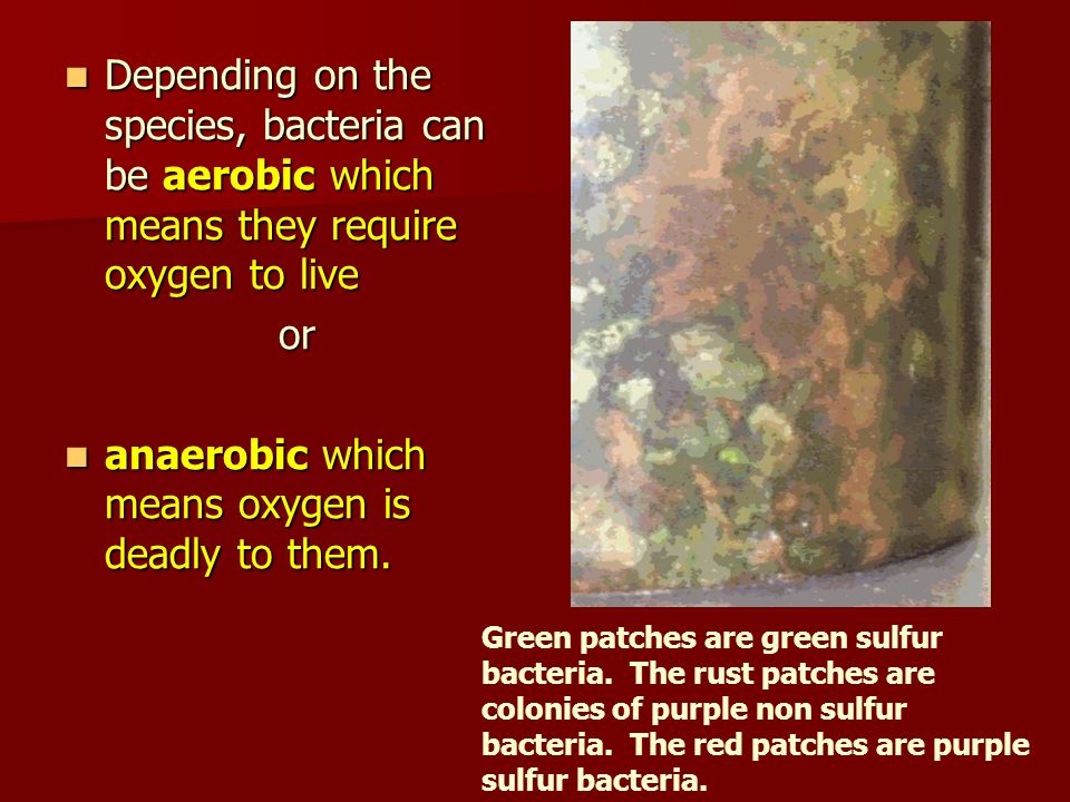 anaerobic which means oxygen is deadly to them.