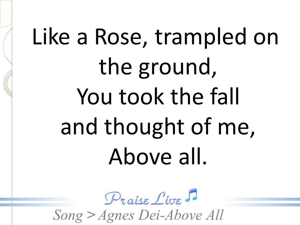 Like a Rose, trampled on the ground, You took the fall and thought of me, Above all.