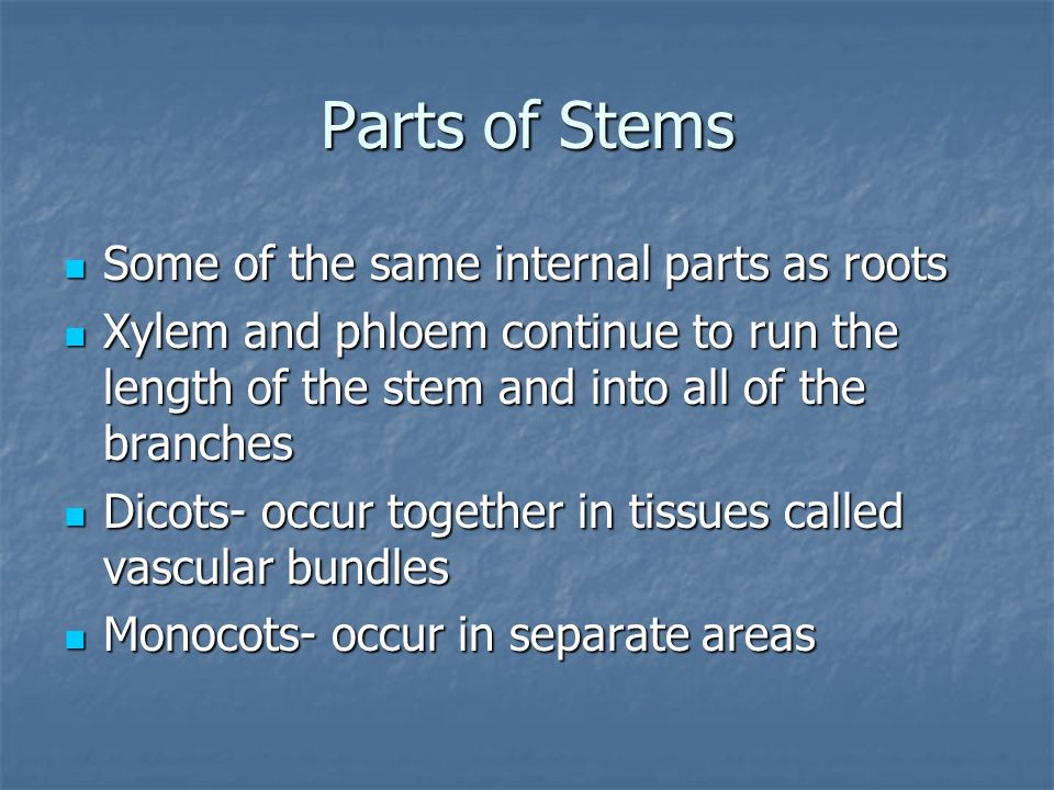 Parts of Stems Some of the same internal parts as roots