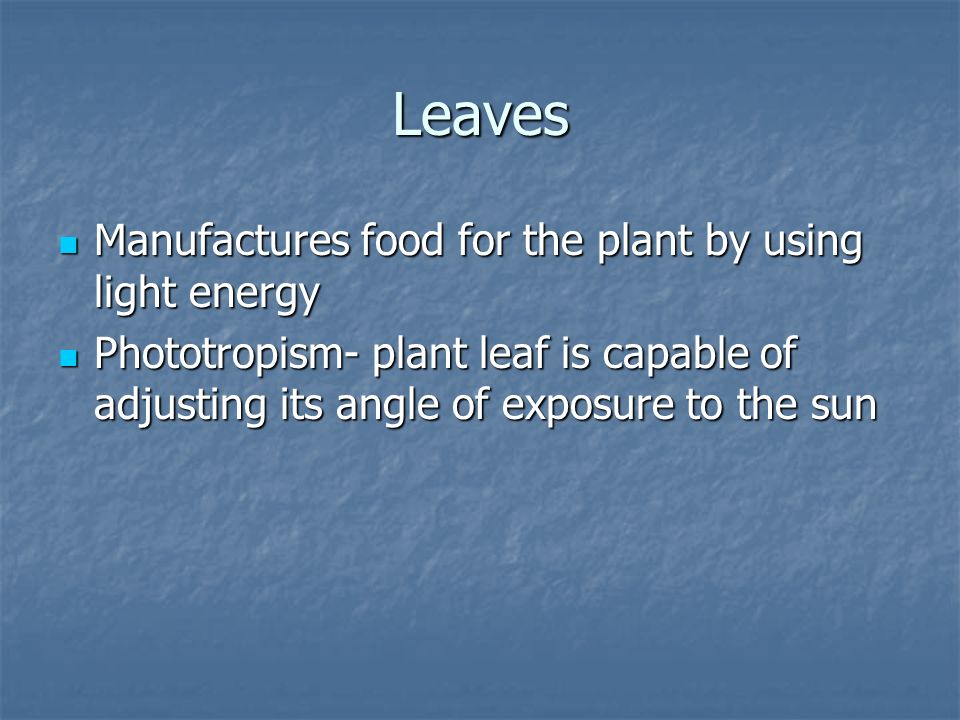 Leaves Manufactures food for the plant by using light energy