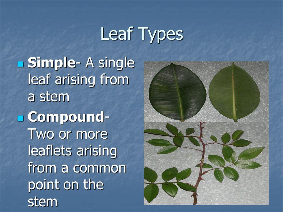 Leaf Types Simple- A single leaf arising from a stem
