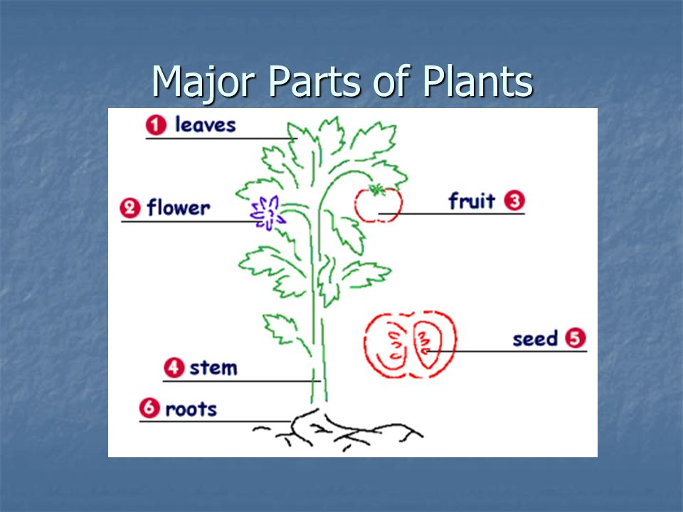 Major Parts of Plants