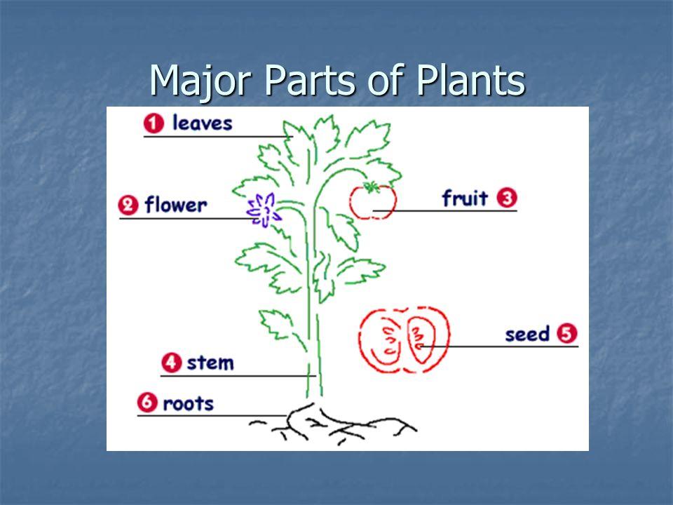 Major Parts of Plants