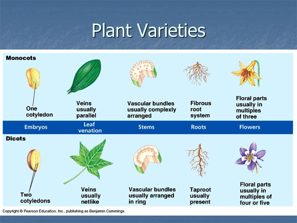 Plant Varieties