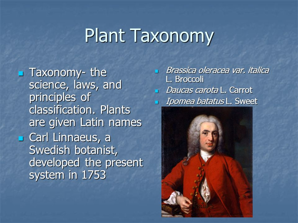 Plant Taxonomy Taxonomy- the science, laws, and principles of classification. Plants are given Latin names.