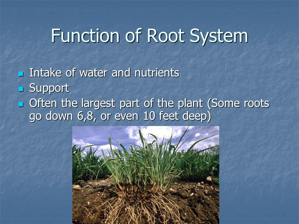 Function of Root System