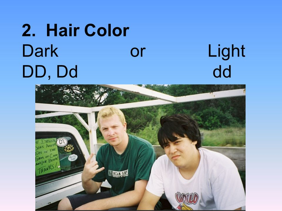 2. Hair Color Dark or Light DD, Dd dd