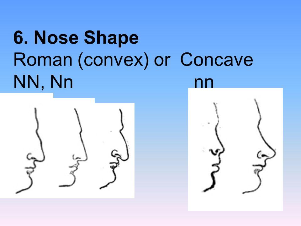 6. Nose Shape Roman (convex) or Concave NN, Nn nn