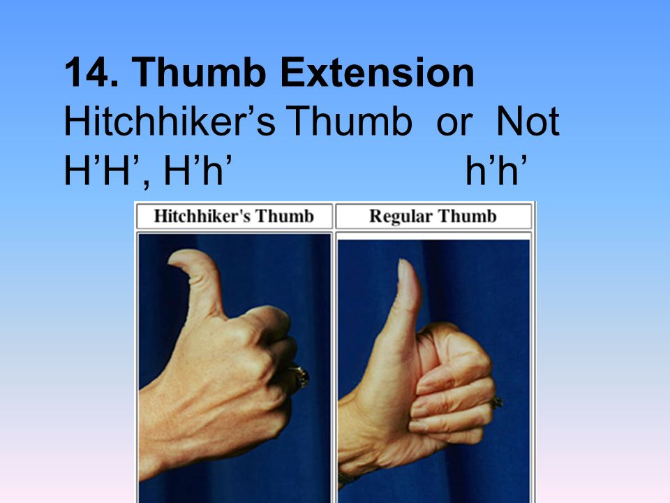 14. Thumb Extension Hitchhiker's Thumb or Not H'H', H'h' h'h'