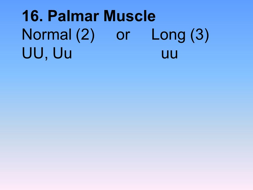 16. Palmar Muscle Normal (2) or Long (3) UU, Uu uu