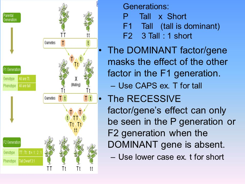 Generations: P Tall x Short. F1 Tall (tall is dominant) F2 3 Tall : 1 short.