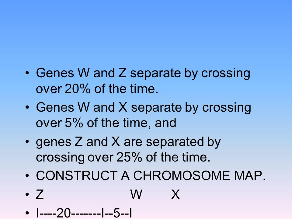 Genes W and Z separate by crossing over 20% of the time.