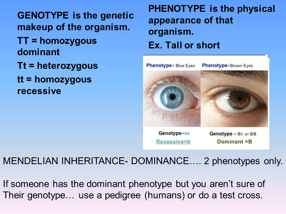 PHENOTYPE is the physical appearance of that organism.