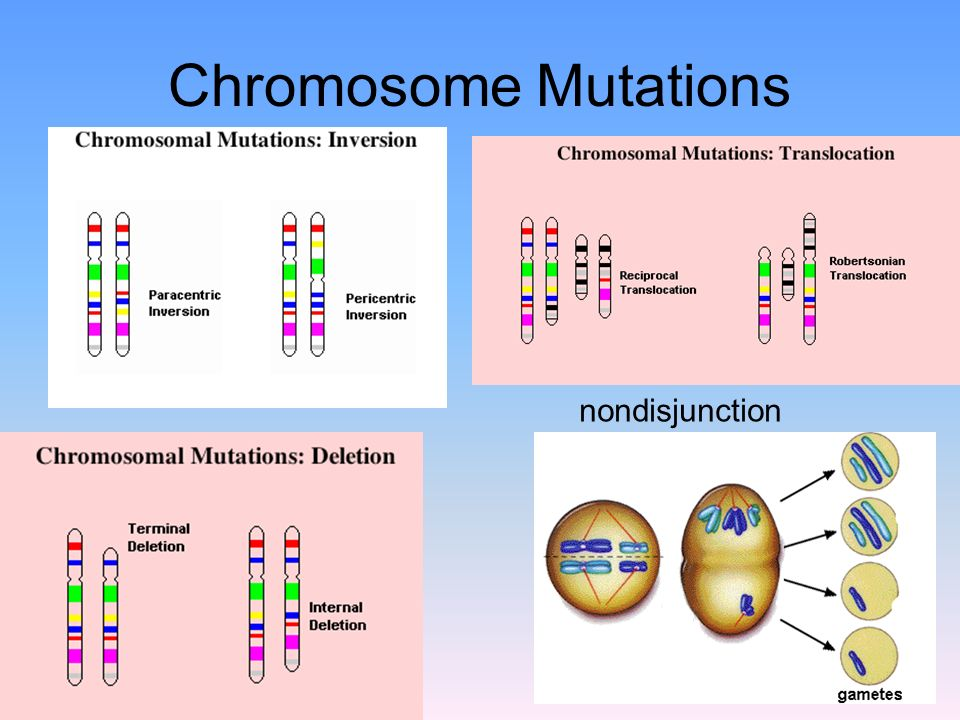 Chromosome Mutations nondisjunction