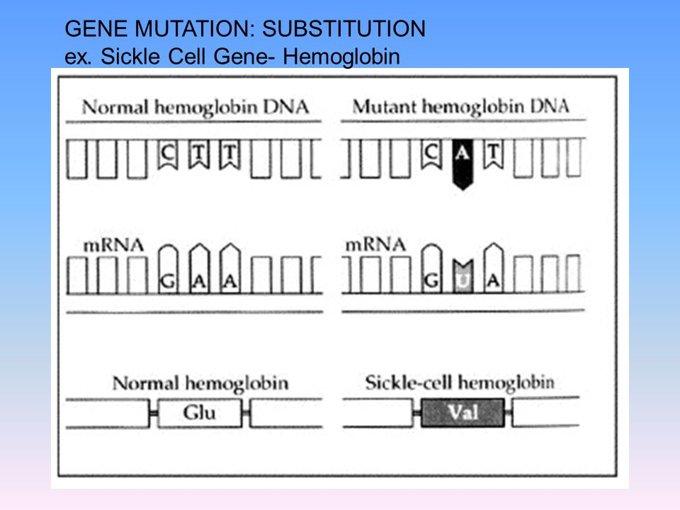 GENE MUTATION: SUBSTITUTION