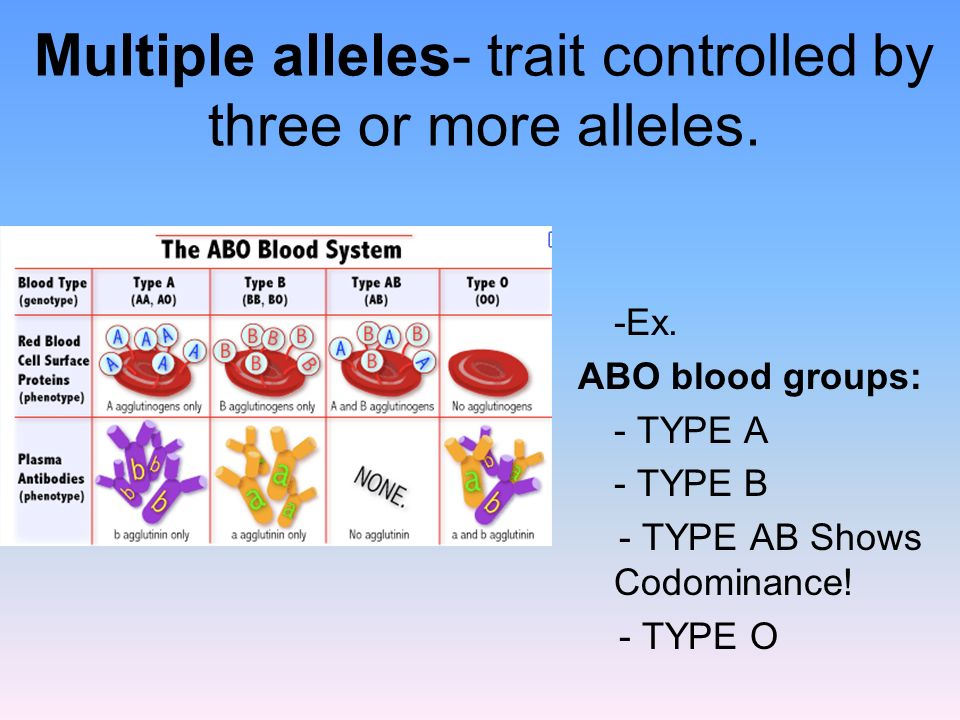 Multiple alleles- trait controlled by three or more alleles.