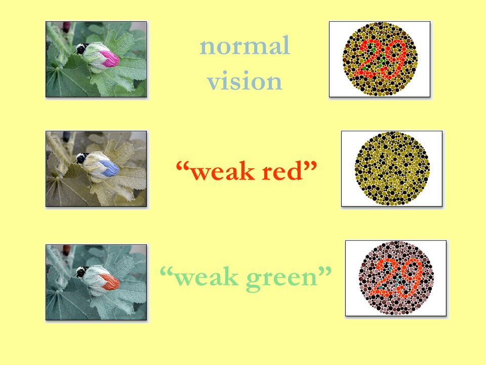 normal vision weak red weak green