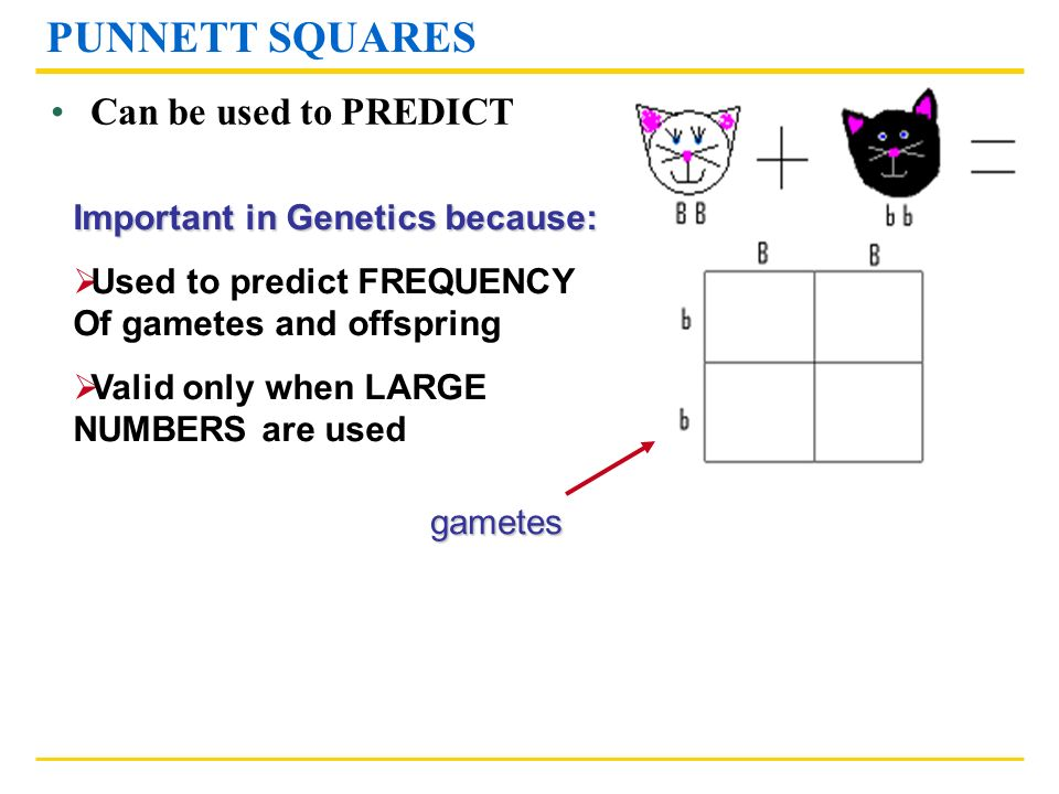 PUNNETT SQUARES Can be used to PREDICT Important in Genetics because: