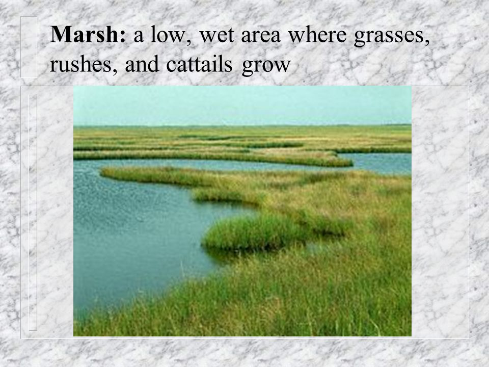 Marsh: a low, wet area where grasses, rushes, and cattails grow