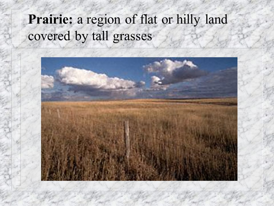 Prairie: a region of flat or hilly land covered by tall grasses