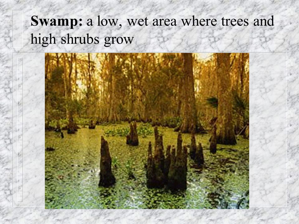Swamp: a low, wet area where trees and high shrubs grow