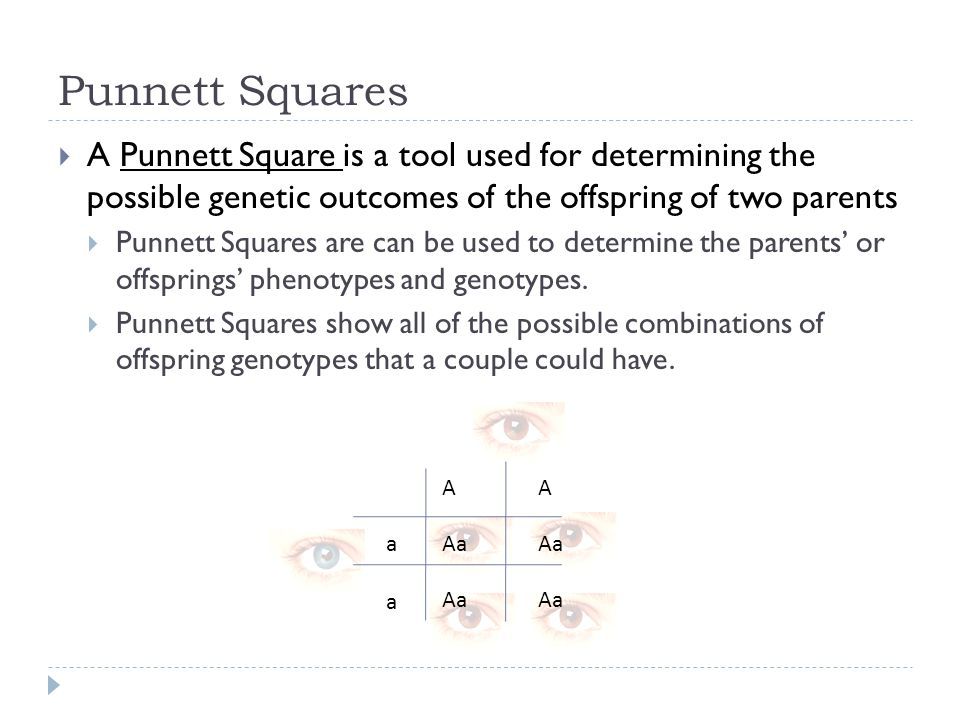 Punnett Squares A Punnett Square is a tool used for determining the possible genetic outcomes of the offspring of two parents.