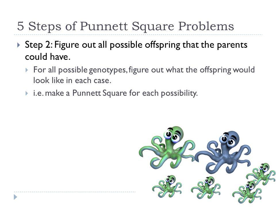 5 Steps of Punnett Square Problems