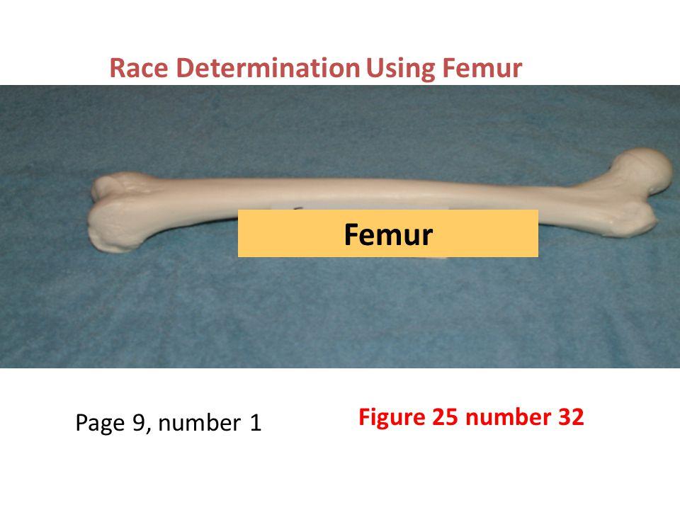 Femur Race Determination Using Femur Figure 25 number 32