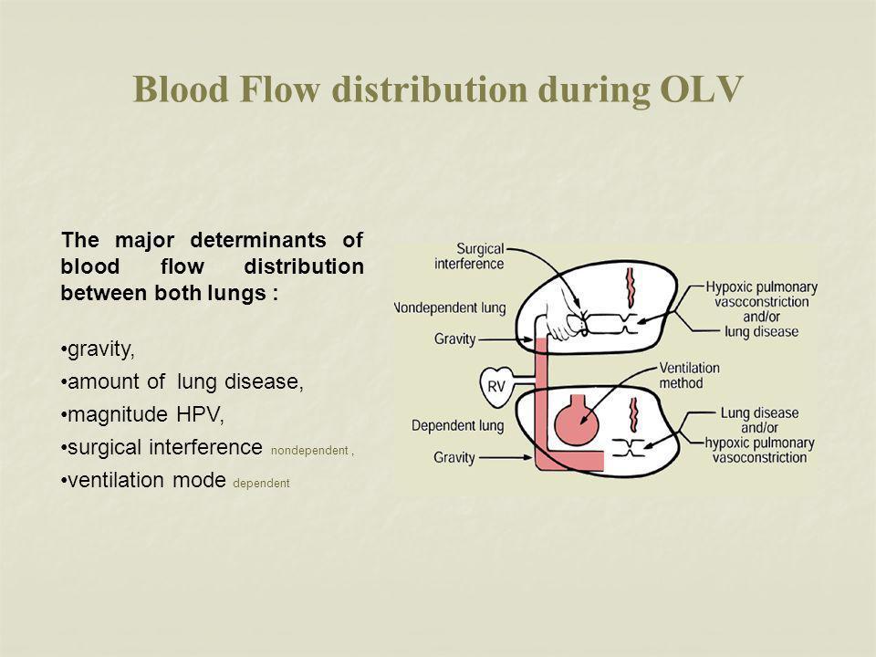 Blood Flow distribution during OLV